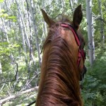 Escaped for a little on my horse... feels nice to be off my phone..