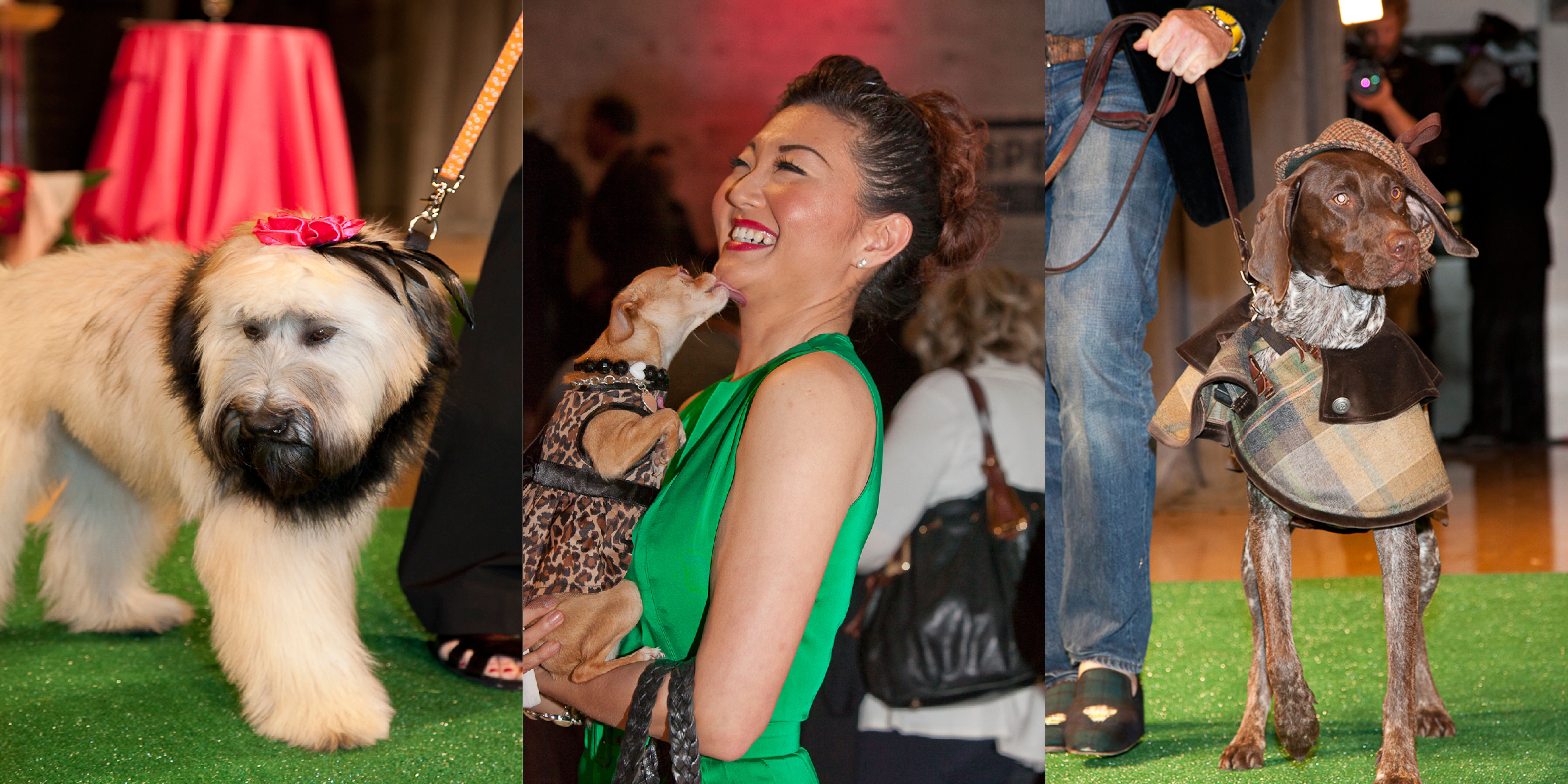 Haute Dog Press Release Photo